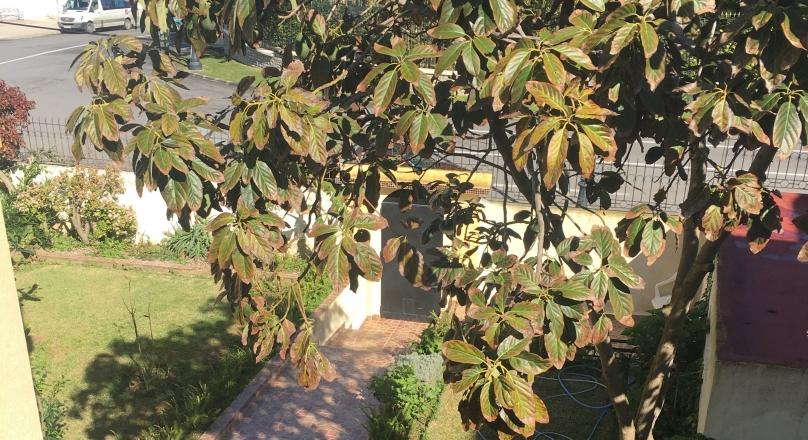 Marshan, sur le plateau, villa avec jardin, restée dans son authenticité, garage.