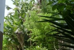 Tanger, dans quartier recherché, belle villa familiale, jardin arboré clos.